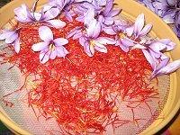 Como Cultivar El Azafran - Cultivo-azafran